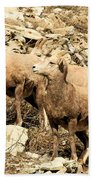 Safety In Numbers Beach Towel