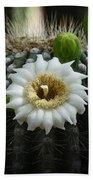 Saguaro Cactus Blooms  Beach Towel