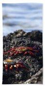 Sally Lightfoot Crabs Beach Towel
