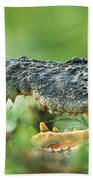 Saltwater Crocodile Crocodylus Porosus Beach Towel by Cyril Ruoso