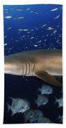 Sand Tiger Shark Swimming In Blue Water Beach Towel