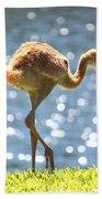 Sandhill Crane Daydreamer Beach Towel