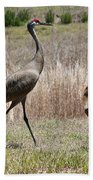 Sandhill Parade Beach Towel