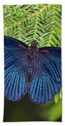 Scarlet Swallowtail Beach Towel by Joann Vitali