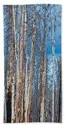 Scarred Pines Yellowstone Beach Towel by Steve Gadomski