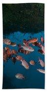 School Of Red Bigeye Under A Rocky Beach Towel by Mathieu Meur