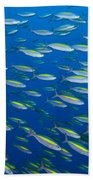 School Of Wide-band Fusilier Fish Beach Towel