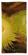 Sea Anemone Beach Towel