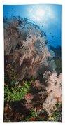 Sea Fan On Soft Coral In Raja Ampat Beach Towel