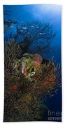 Sea Fan Seascape, Belize Beach Towel