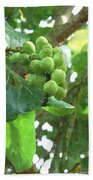 Sea Grape Sgwc Beach Towel