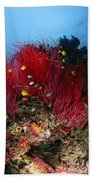 Sea Whips And Soft Coral, Fiji Beach Towel