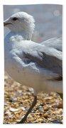 Seagull Beach Towel