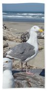 Seagull Bird Art Prints Coastal Beach Bandon Beach Towel
