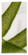 Seaweed Beach Towel