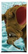 Sem Of A Mutant Fruit Fly Beach Towel