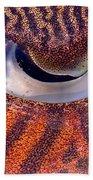 Sepia Cuttlefish Beach Towel
