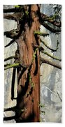 Sequoia And El Capitan Beach Towel