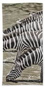 Several Thirsty Zebra Beach Towel