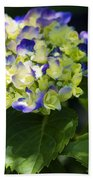 Shadowy Purple And White Emerging Hydrangea Beach Towel