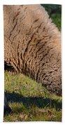 Sheep 3 Beach Towel