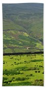 Sheep Graze In A Pasture In Swaledale Beach Towel