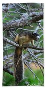 Shermans Fox Squirrel Beach Towel