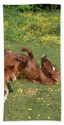 Shetland Pony And Foal Playing Beach Towel