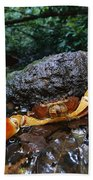 Short-tailed Crab Potamocarcinus Sp Beach Towel