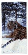 Siberian Tiger Lying On Mound Of Snow Beach Towel