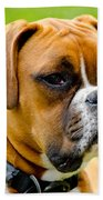 Sidney The Boxer Beach Towel