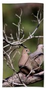 Siesta Time - Mourning Dove Beach Towel
