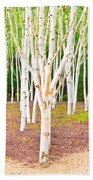 Silver Birch Trees Beach Towel