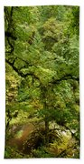Silver Falls Rainforest Beach Towel