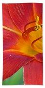 Single Red Lily Closeup Beach Towel