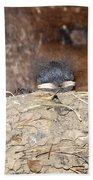 Sleeping Barn Swallows Beach Towel