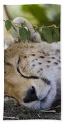 Sleeping Cheetah And Cub Kenya Beach Towel