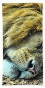 Sleeping Lion Beach Towel