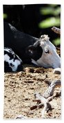 Sleepy Arizona Cows Beach Towel