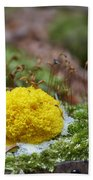 Slime Mould Beach Towel