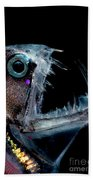 Sloanes Viperfish Beach Towel