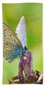 Little Butterfly Beach Sheet