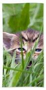 Small Kitten In The Grass Beach Towel