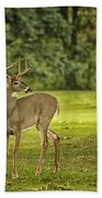 Small Stag Beach Towel
