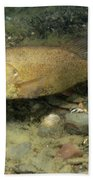 Smallmouth Bass Protecting Eggs Beach Towel