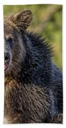 Smiling Grizzly Beach Towel