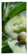 Snail On The Leaf Beach Towel