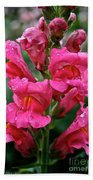 Snapdragon  Beach Towel