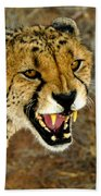 Snarl Beach Towel