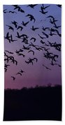 Snow Geese Migrating Beach Towel